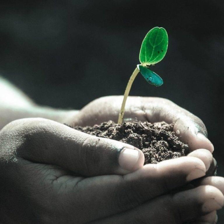 Co by się stało NAJLEPSZEGO, gdybyś przyjęła, że  Twój umysł to żyzna gleba?